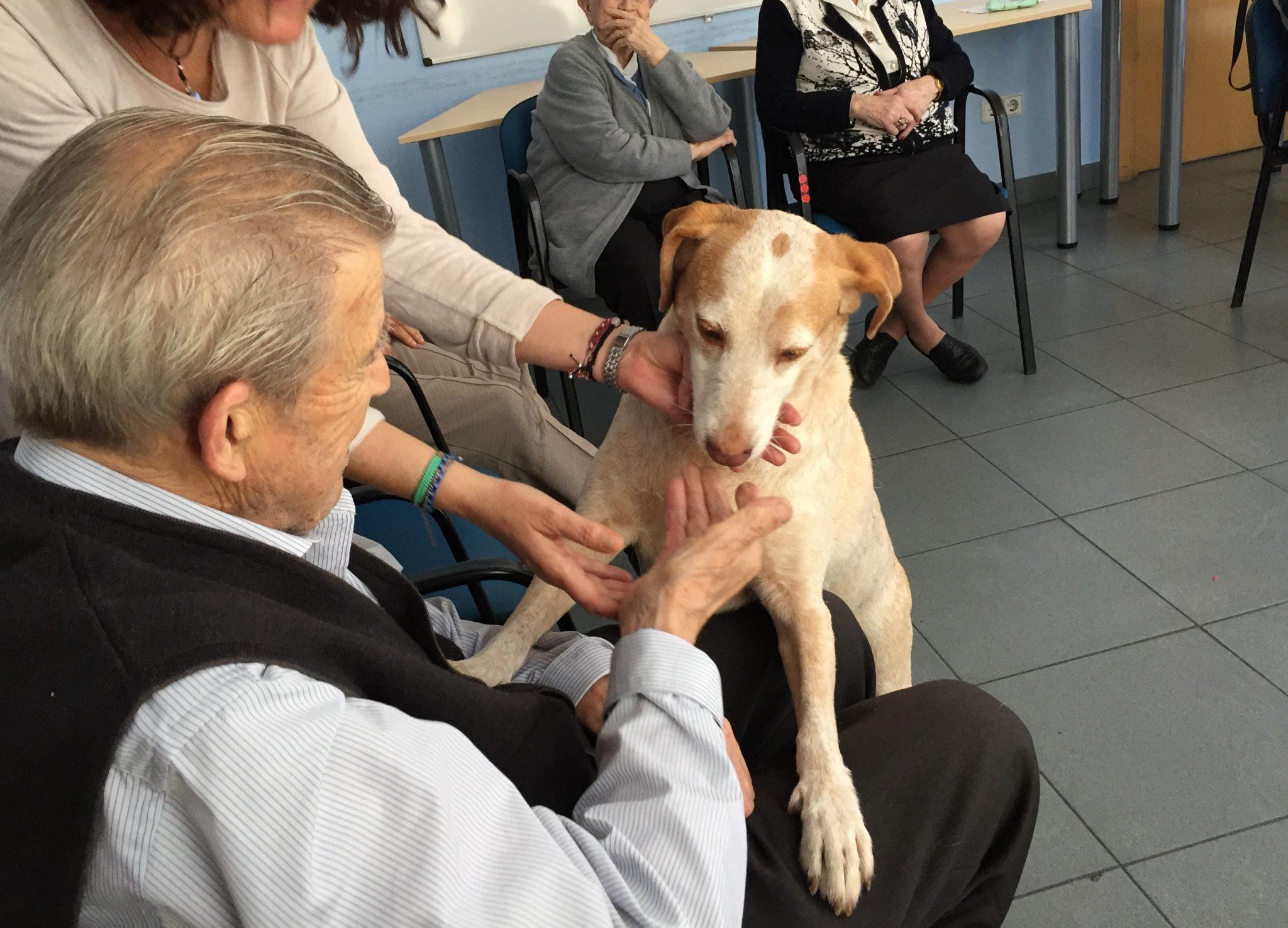 Teràpia amb gossos i persones amb Alzheimer